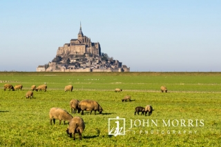 Mont-Saint-Michel from a pasture with grazing sheep