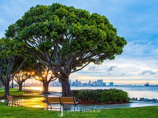 San Diego Skyline Sunrise from Harbor Island
