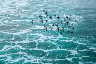 Ocean Birds over seafoam