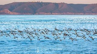 Ocean Birds at Coronado Beach